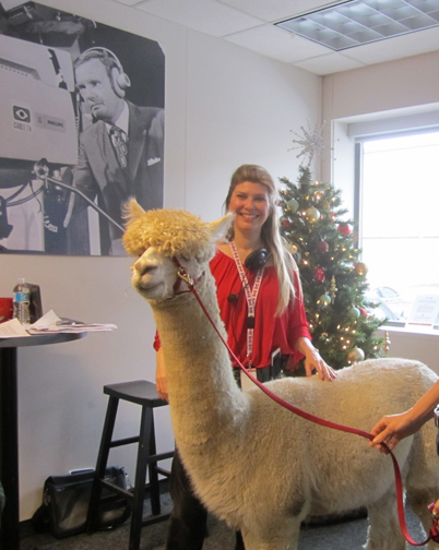 Michelle Messina Coordinator TV Station Christmas Alpaca